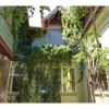TOMIS II - Casa P+M cu etaj si curte cocheta!