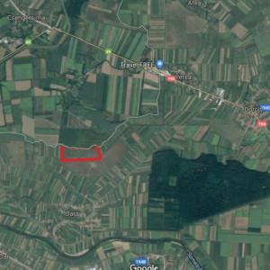 De vânzare teren cu Plantație de Cătină Bio